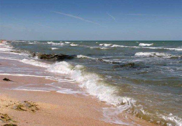 Аномальная зима натворила беды в Азовском море, умные существа на грани выживания