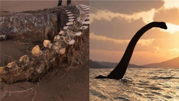На шотландський пляж винесло гігантський хребет невідомої істоти (фото)