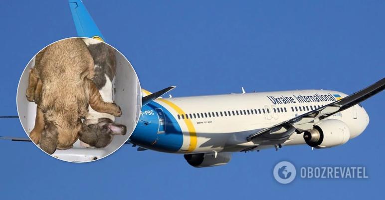 Стало известно о гибели 38 щенков на борту украинского самолета: МАУ отреагировала