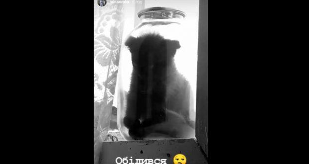За знущанням над кошеням 20-річному мешканцю одного з сіл Сокальщини загрожує три роки неволі