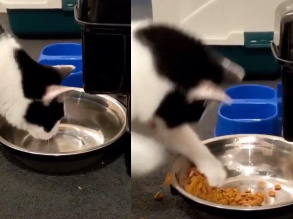 Кот увидел свое отражение в миске и начал драться с «соперником» за корм: смешное видео