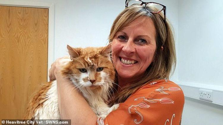 В Британии умер самый старый в мире кот, которому было за тридцать. Фото