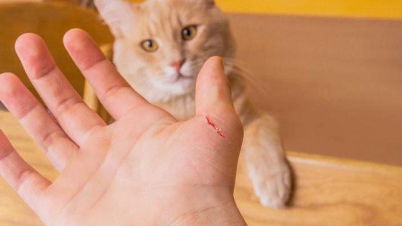Кішка подряпала свою господиню, і жінка померла через 9 днів