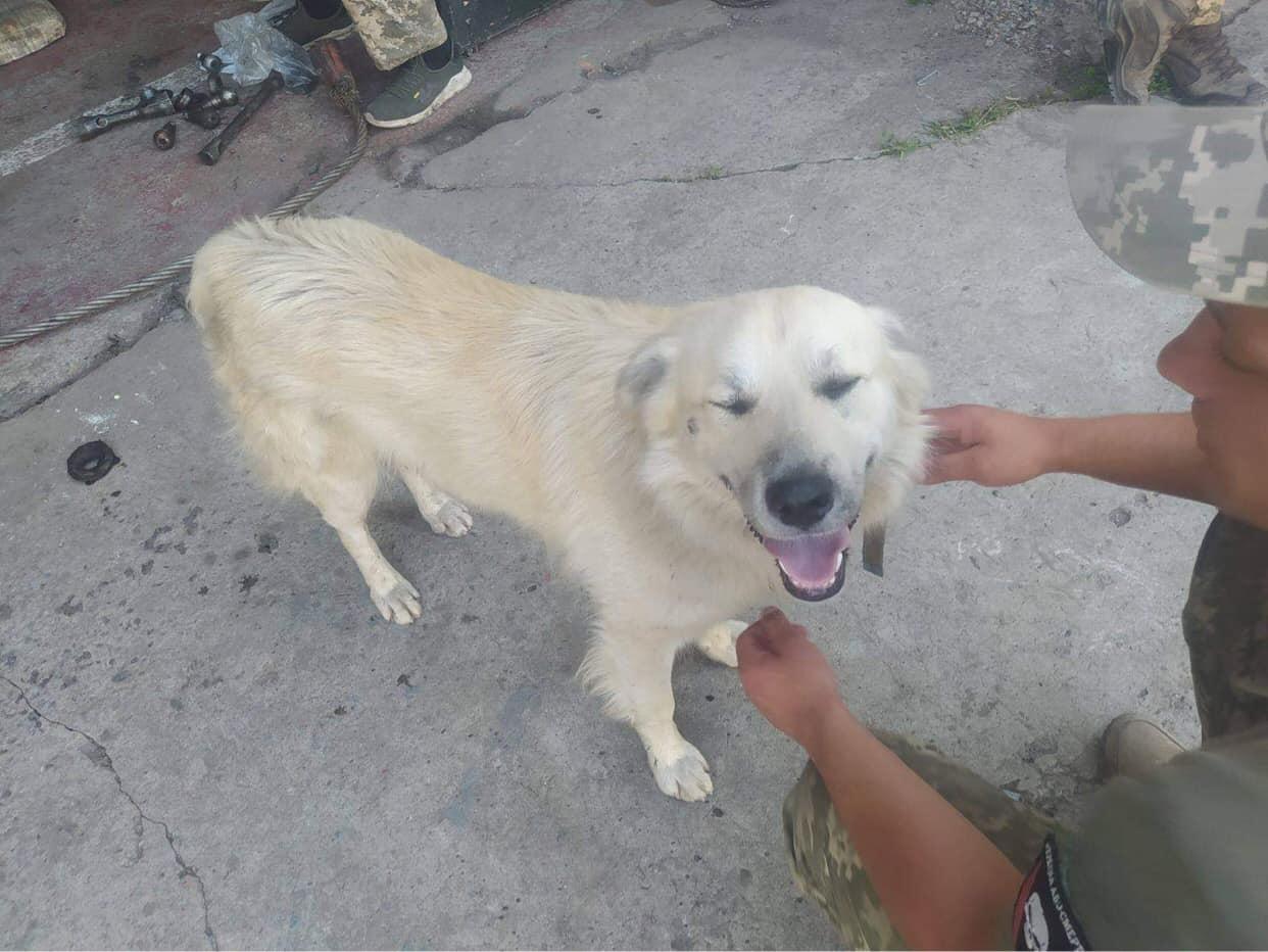 Украинский Хатико: потерявшийся по дороге в ООС пес полгода ждал на вокзале возвращения бойцов