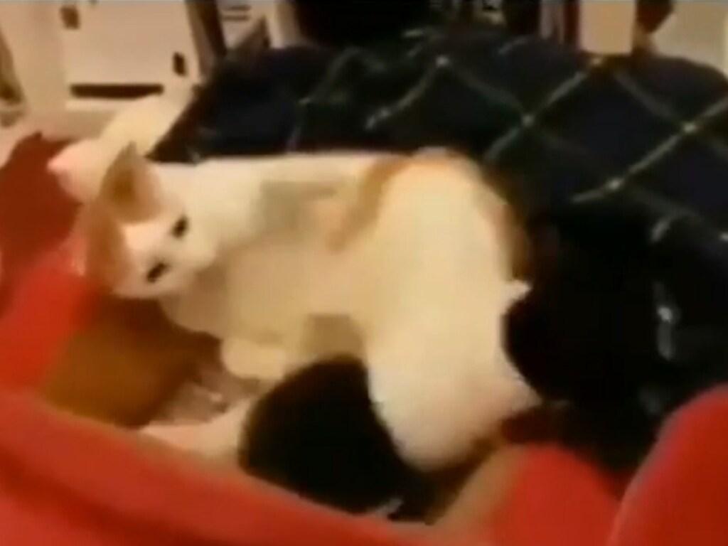 Суровый кот показал, что делать, когда тебя сильно достали (ФОТО, ВИДЕО)
