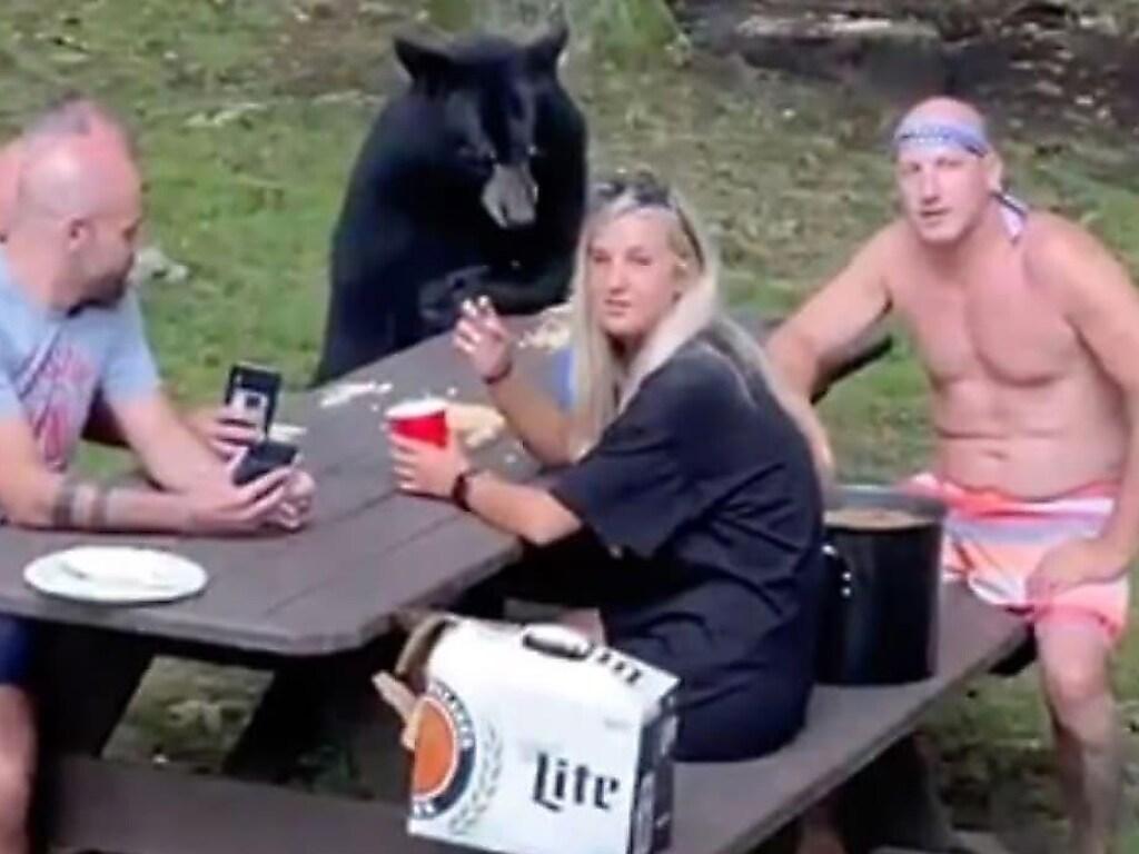 Наглый медведь присоединился к туристам на пикнике (ФОТО, ВИДЕО)