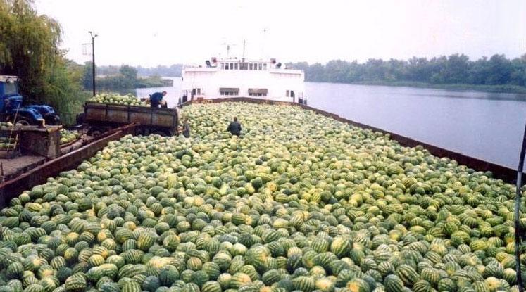 Баржа из Херсона обвалила цены на арбузы в Киеве
