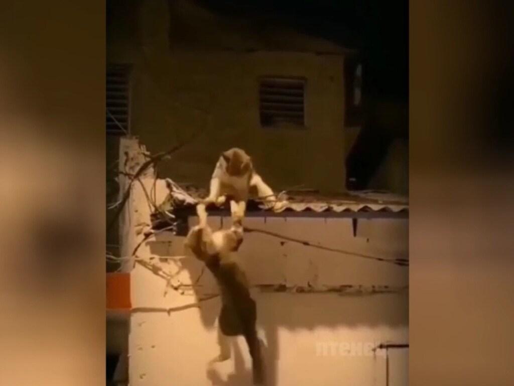 Дерзкая драка уличных котов попала на видео: зрители в восторге от этого боевика (ФОТО, ВИДЕО)