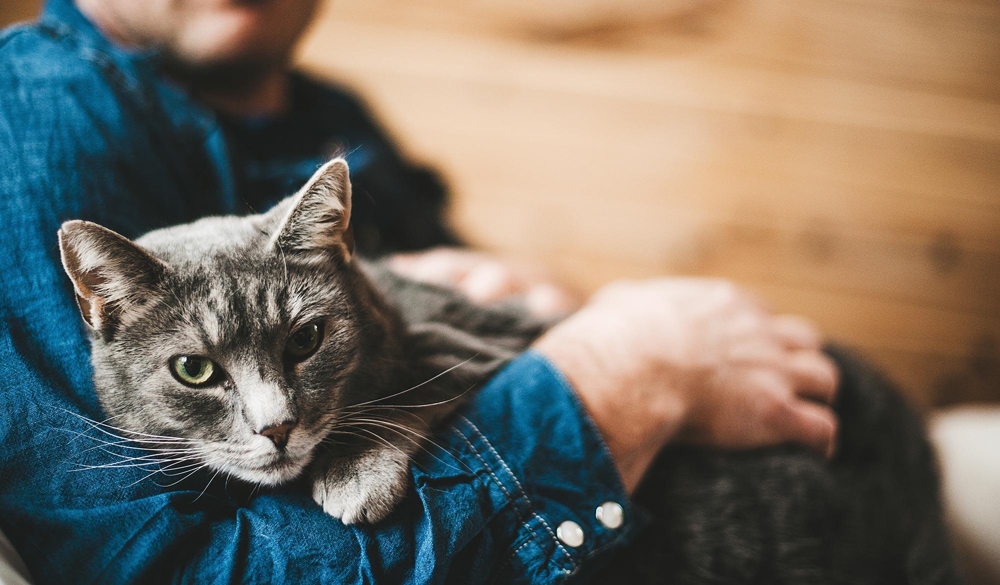 Боязнь расставания у кошек