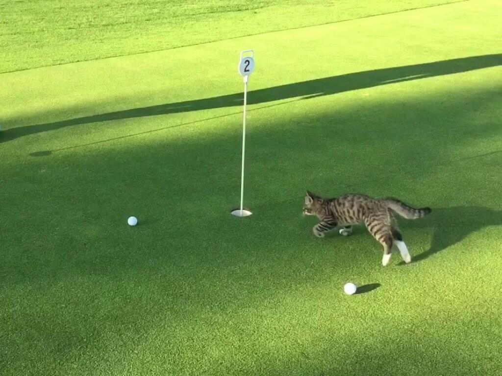 Девушка сыграла в гольф с кошкой. Не каждый человек сможет!