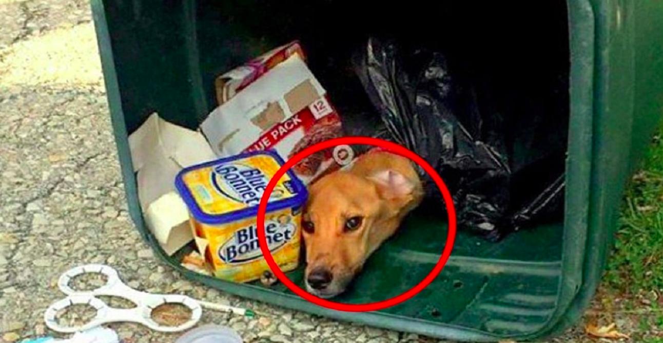 Девушка решила переехать к парню, а собаку просто выбросила…в мусорный бак…