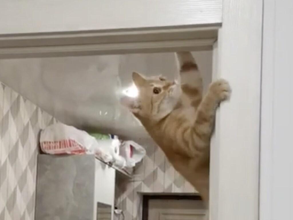 Кошка-«паук» невероятным способом открыла двери и рассмешила соцсети (ФОТО, ВИДЕО)