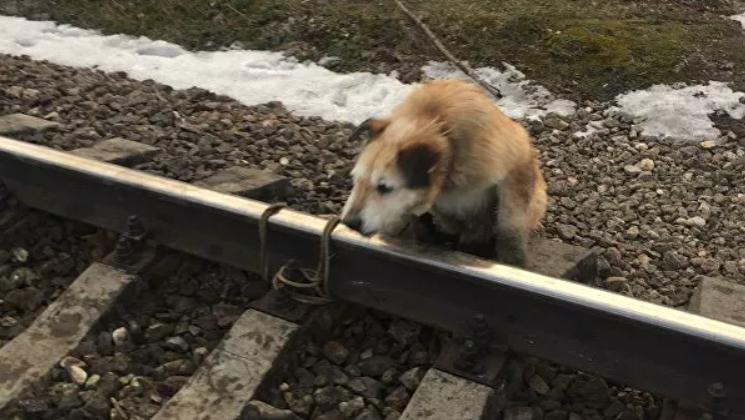 Мужчина привязал пса к рельсам со словами: «Он свое уже отжил»