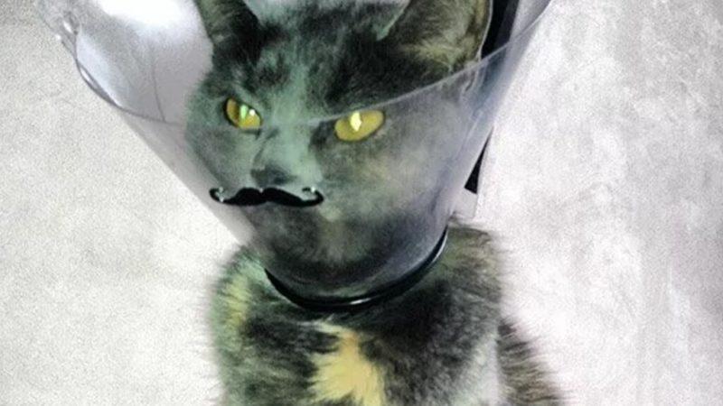 Кот с замедленной реакцией умилил Сеть (ФОТО, ВИДЕО)