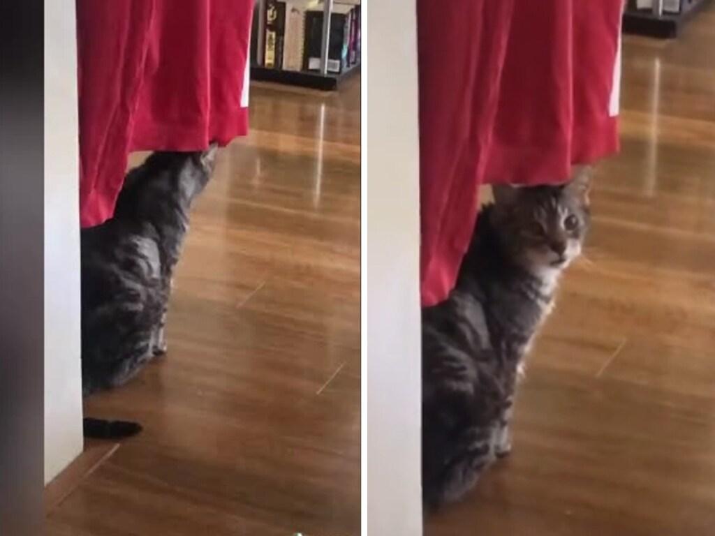 Король драмы: Оставшийся один дома кот устроил истерику и рассмешил Сеть (ФОТО, ВИДЕО)