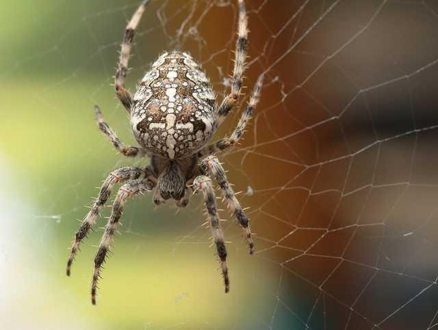 Вцепился в губу: на Закарпатье ребенка атаковал опасный паук