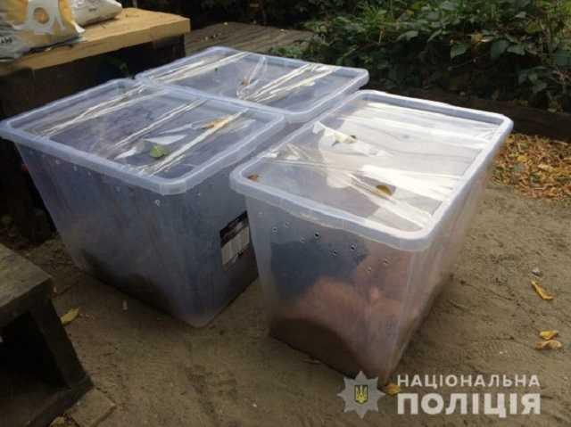 В Харькове нашли выброшенных кошек, закрытых в пластиковые контейнеры