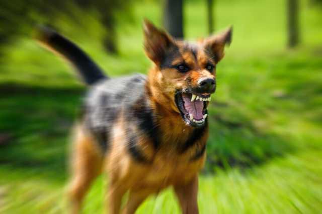 Шрам на всю жизнь: в Днепре собака изуродовала лицо девочке