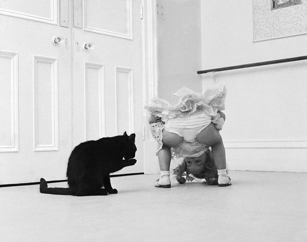 Британские ученые нашли действенный способ общения с котами при помощи прищура глаз