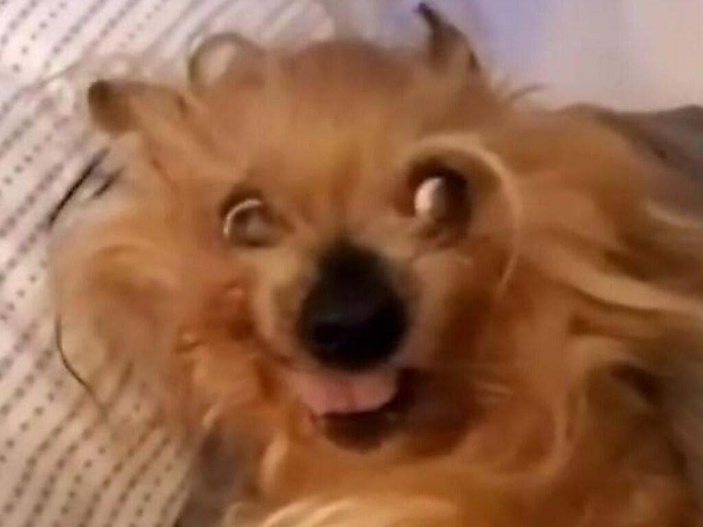 Смешная реакция пёсика на утренние подъёмы! Вы также просыпаетесь по утрам?