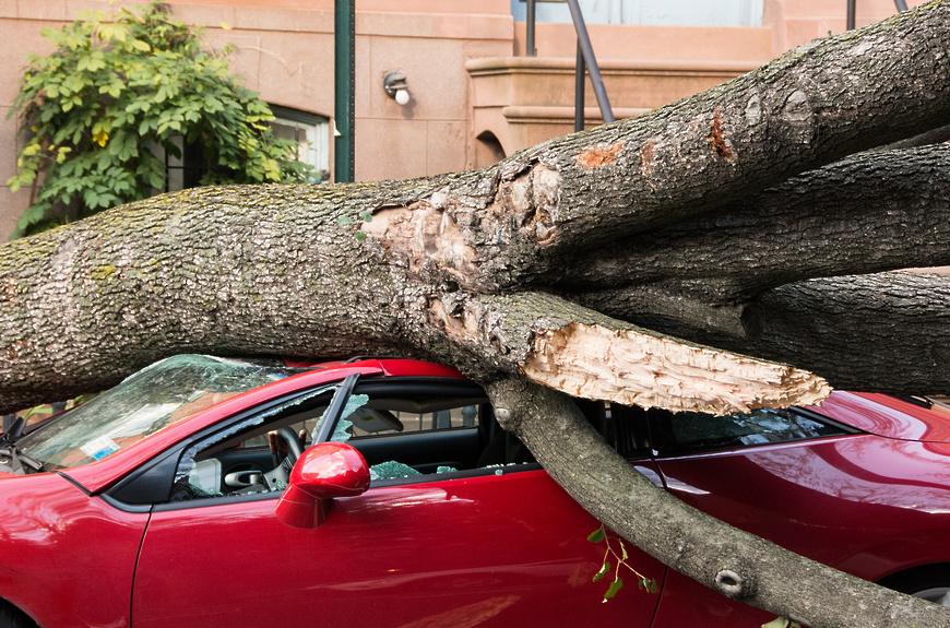 Если дерево упало на авто: украинцам рассказали, куда обращаться за компенсацией
