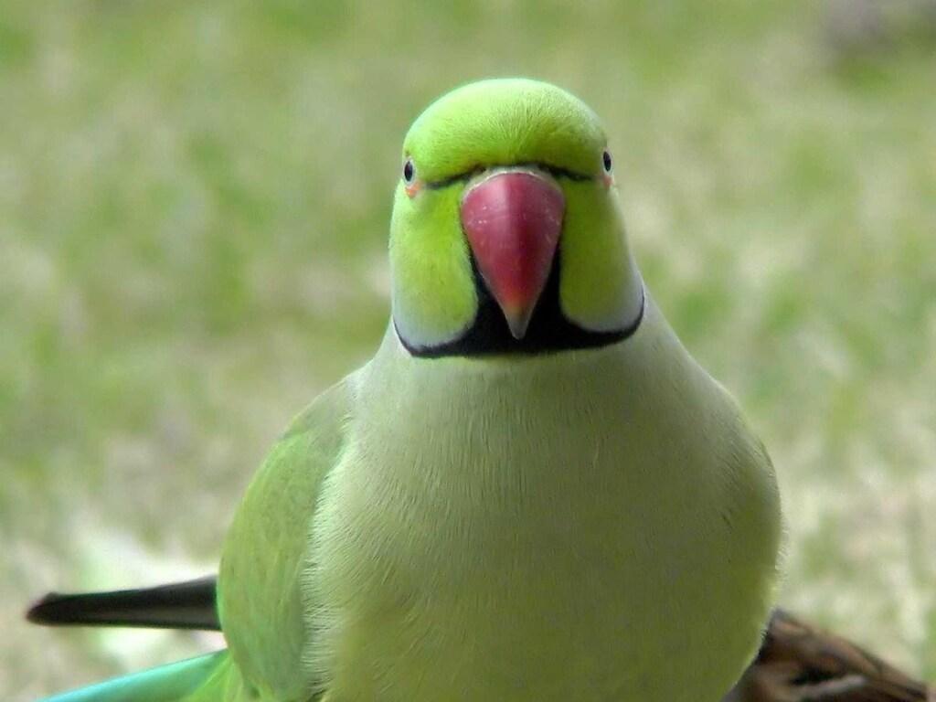 Смышленые попугаи научились играть в волейбол и теперь набирают армию болельщиков в Сети (ВИДЕО)
