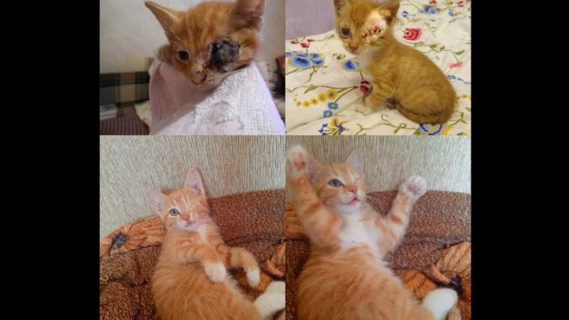 В Киеве не могут найти семью для особого кото-ребенка