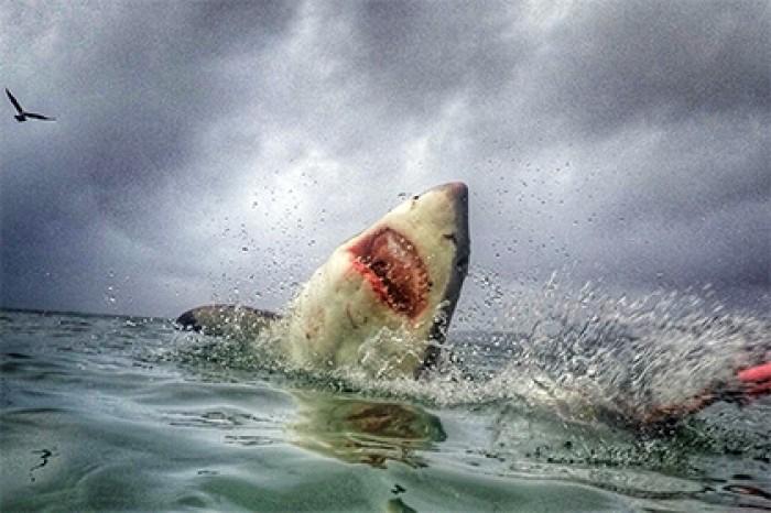 У Єгипті акула покусала родину українців: дитина в реанімації. Страхова відмовляється компенсувати травми