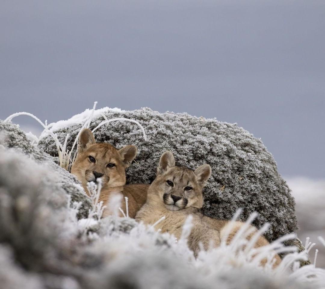 На Україну насувається сильне похолодання: названа дата першого снігу