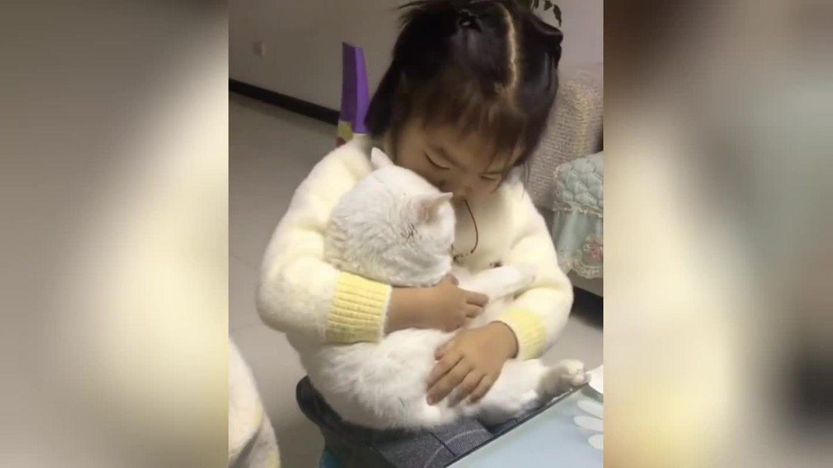 Обнимашки маленькой девочки с пушистой кошкой растрогали Сеть