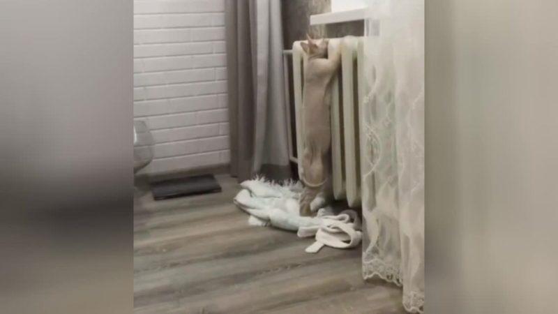 Замерзший котик вызвал сожаление у пользователей Сети
