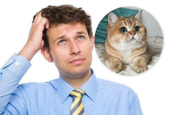 «Знайди кота!»: Українців спантеличила нова оптична ілюзія, над нею ламають голову всі (фото)
