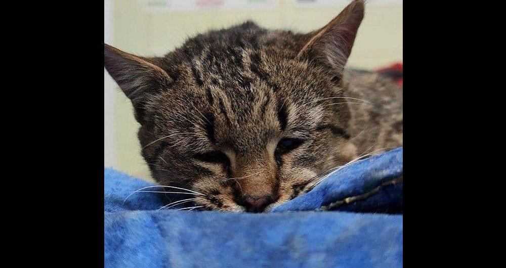 В Києві кота затягнуло в механізм машини за хвіст і намотало на шків