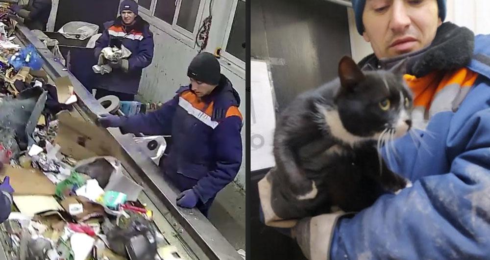На мусороперерабатывающем заводе нашли живого кота в завязанном пакете. Видео