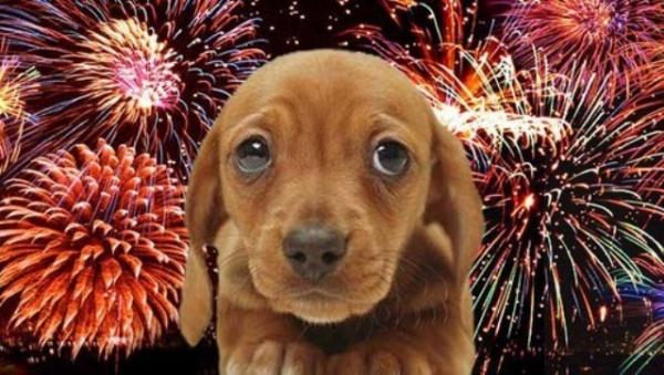 «Епілепсія, корчі, смерть»: Ветеринар описала як у ці дні гинуть собаки від салютів