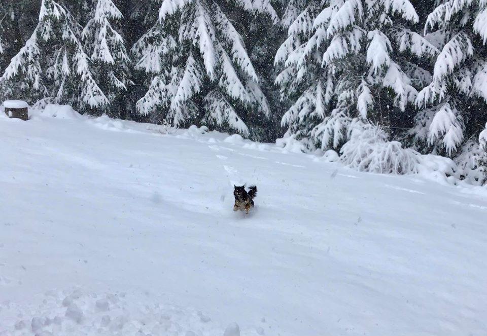 «Справжня зима з снігопадами прийде» Народний синоптик дав несподіваний прогноз погоди на 2022