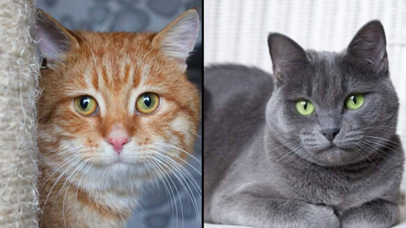 В Киеве целая спасательная операция по поиску дома для двух котов. Завтра их выкинут на улицу