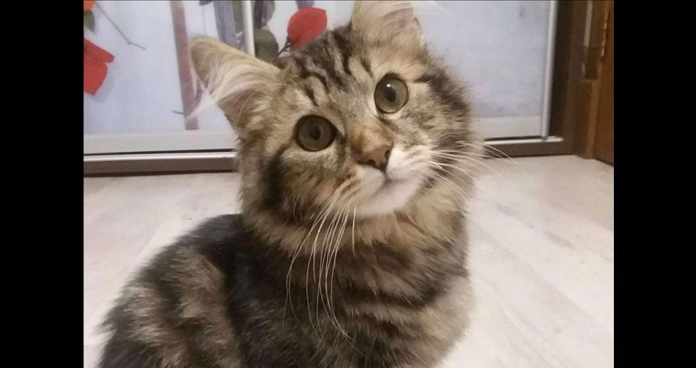 В г.Бахмач хотят усыпить 5-месячного котенка мейн-куна. Время идет на часы