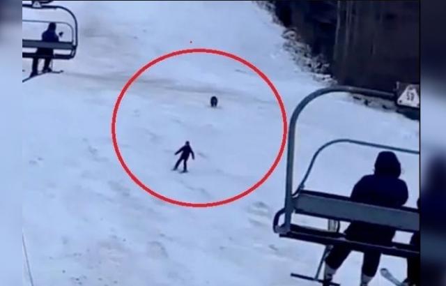 На гірськолижному курорті в Карпатах ведмідь влаштував погоню за туристом (ВІДЕО)