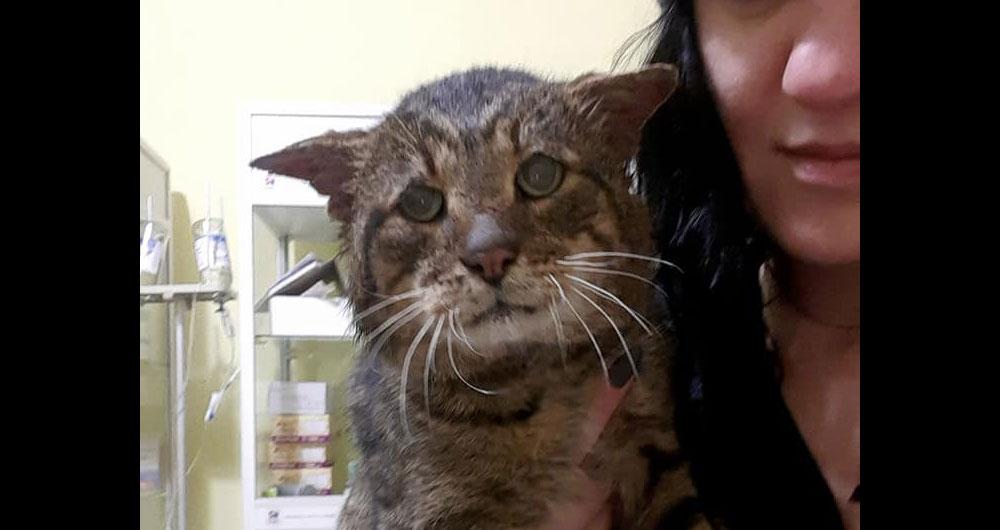 «Он не жил, он отсидел срок» Волонтеры спасли кота Гришу из расформированной колонии под Киевом