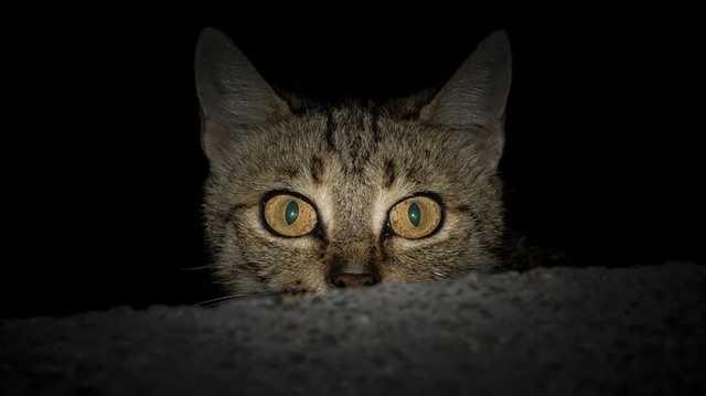 В Одесской области подросток отрезал котам лапы и головы