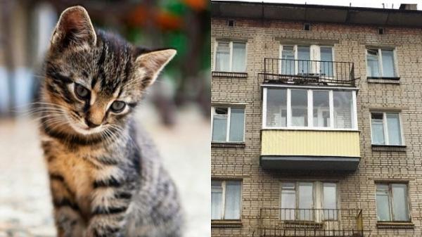 Викинула кошеня з балкона: суд покарав жительку Рівненщини