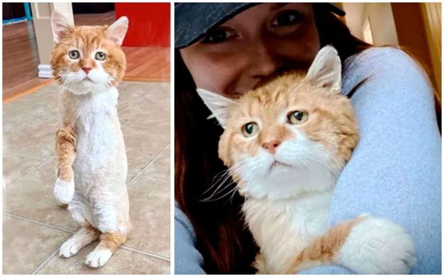 История грустного трехлапого кота: Питомец спустя 8 лет вернулся к дому старого хозяина, но тот давно..