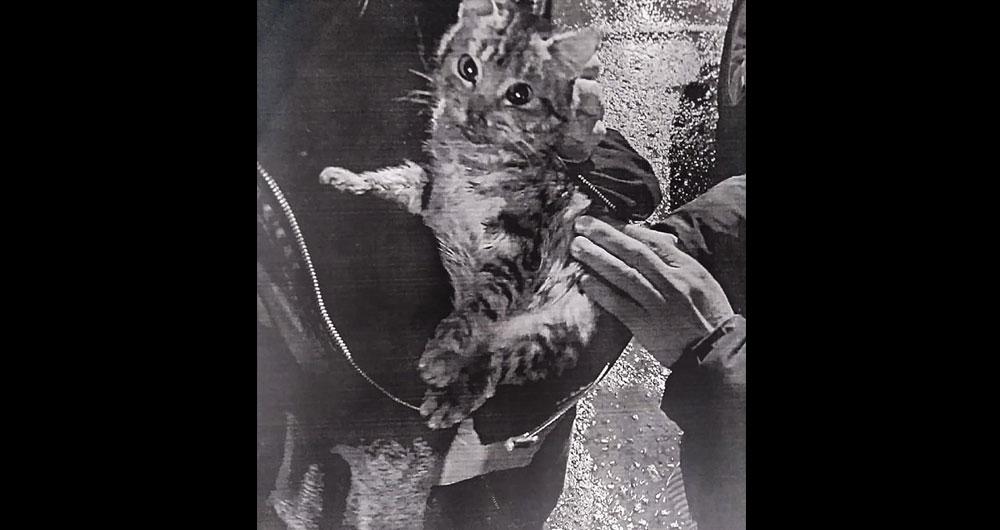 Коти з вирваними кігтями, пораненнями та порізами: в Енергодарі зловили шкуродера