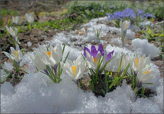 Синоптик розповів, коли в Україні розпочнеться справжня весна