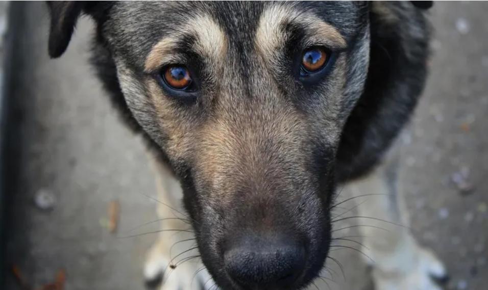 В Италии собака спасла жизнь хозяину, неделю лежавшему с переломом в горах