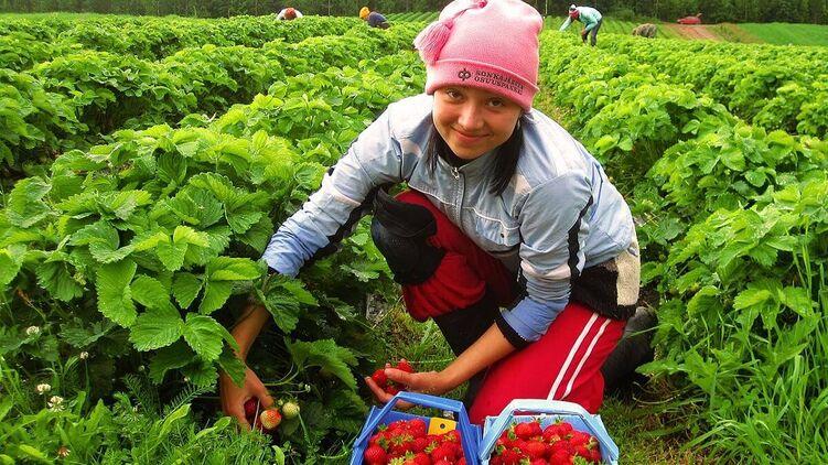 Не на кофе, а на поля. Германия планирует упростить трудоустройство для украинцев. Кого зовут?