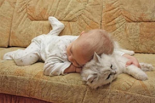 «Трясли малюка, але…» Кіт-убивця: батьків ніхто не винить у смерті малюка (ВІДЕО)