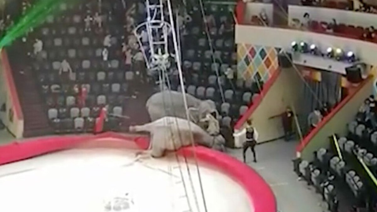 Епічна бійка слонів у російському цирку: люди втікали у паніці – відео