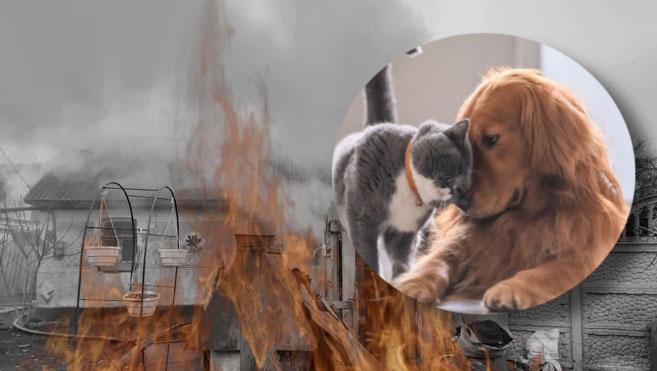 Трагедія у притулку біля Здолбунова: тварини загинули у вогні